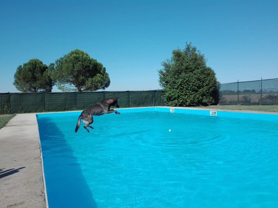 Una piscina per cani e proprietari