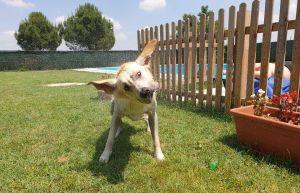 piscina per cani Sale centro cinofilo Canta alla Luna