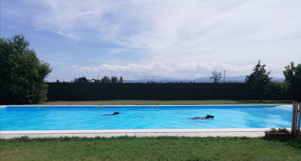 Il nuoto è uno sport completo, divertente e corroborante, anche per il cane.