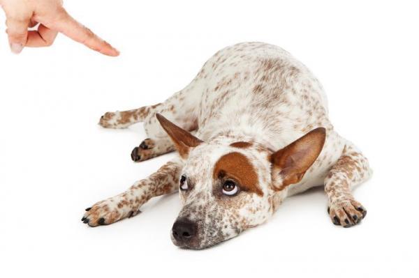 Quando la relazione col cane non funziona – Parte 1