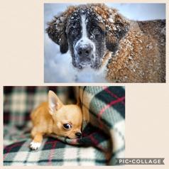 La memoria di razza guida le scelte del tuo cane. Scegli il cane giusto per te