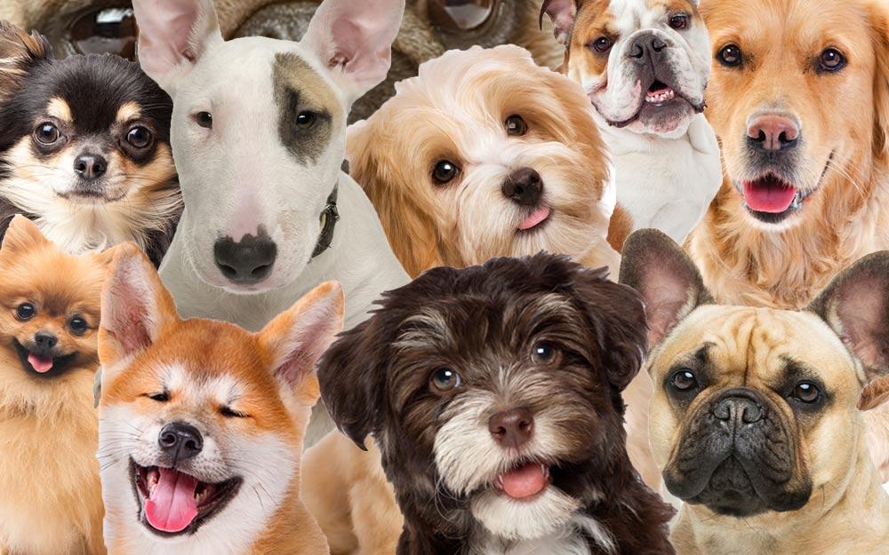 come scegliere il cane giusto