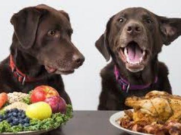 Come  premiare il proprio cane in modo corretto